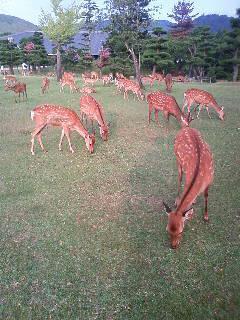 鹿たっぷり