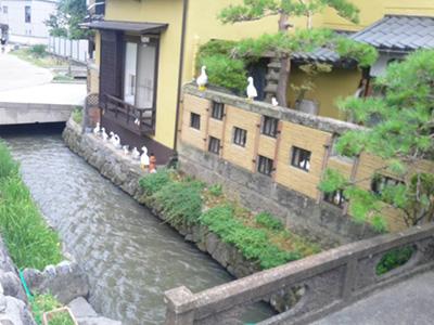 長野大通りそばの家とあひる
