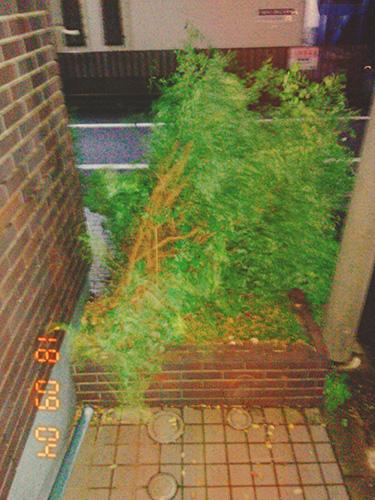 ■緑のぞうさんの証拠写真(2018年9月4日深夜)